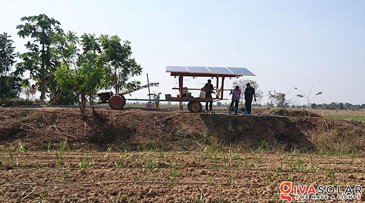 Điện mặt trời kết hợp với Nông Nghiệp 6