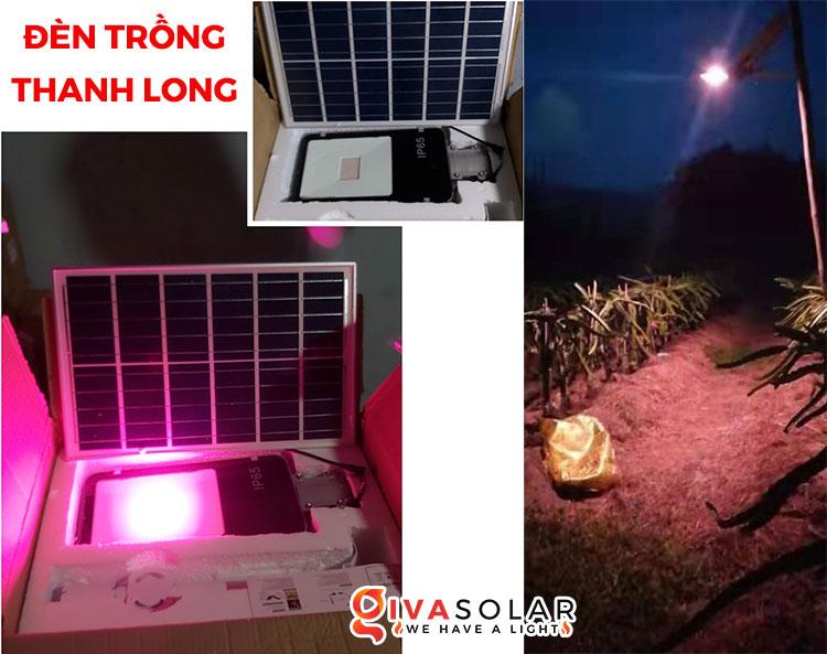 Điện mặt trời kết hợp với Nông Nghiệp 8